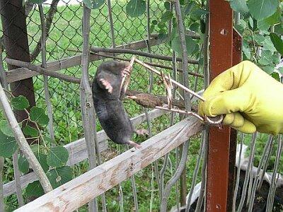mutilõks - mutilõksud - antti loodus